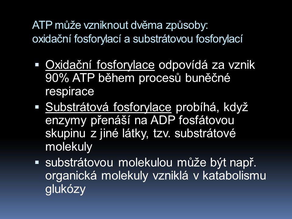 ATP může vzniknout dvěma způsoby: oxidační fosforylací a substrátovou fosforylací