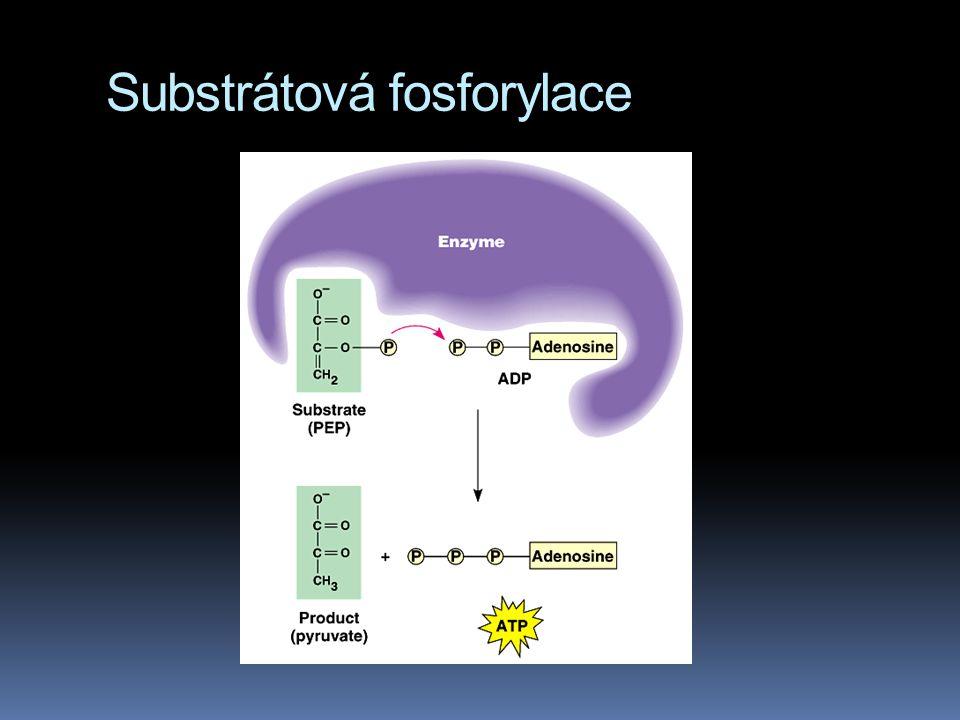 Substrátová fosforylace