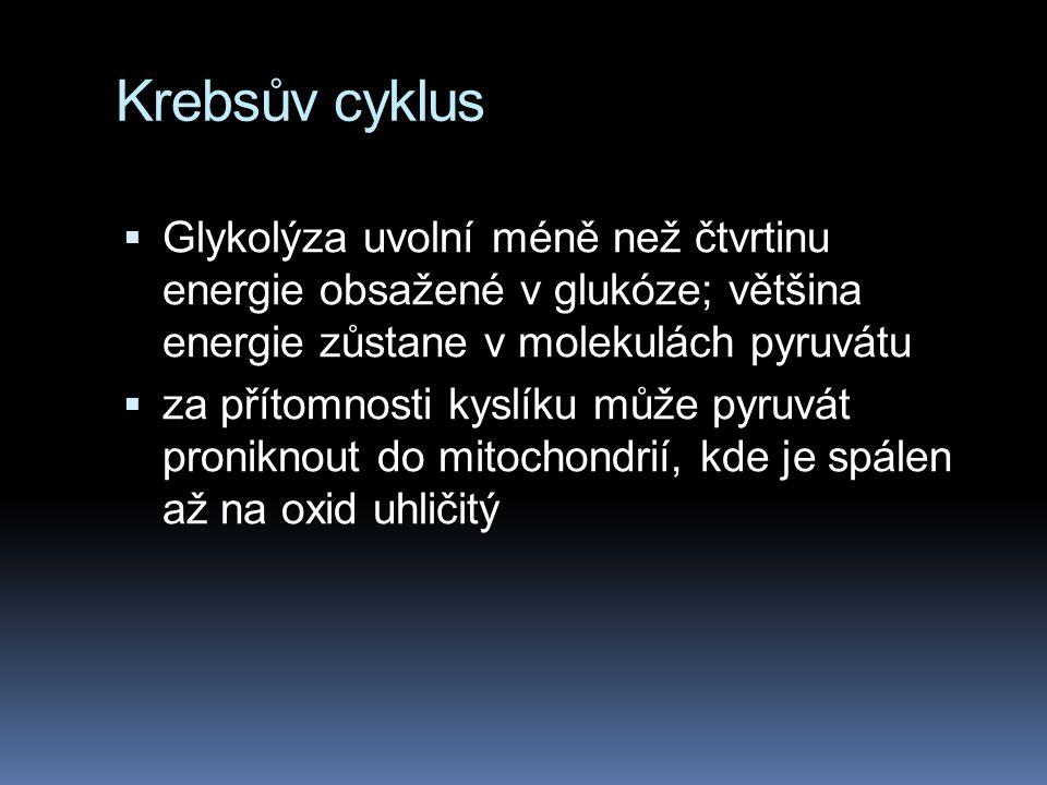 Krebsův cyklus Glykolýza uvolní méně než čtvrtinu energie obsažené v glukóze; většina energie zůstane v molekulách pyruvátu.