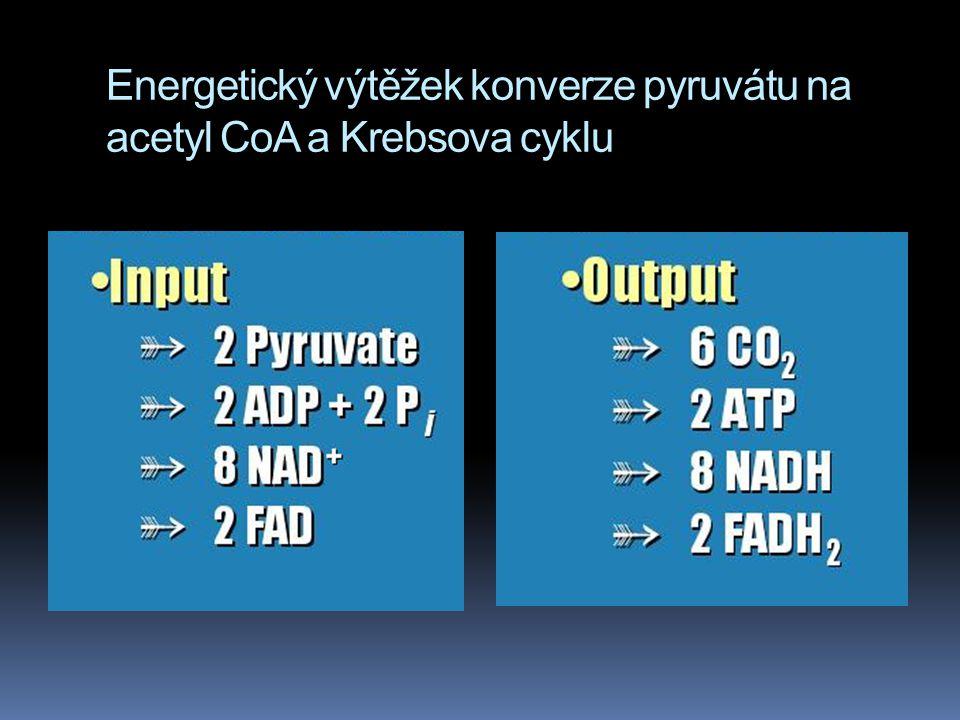 Energetický výtěžek konverze pyruvátu na acetyl CoA a Krebsova cyklu