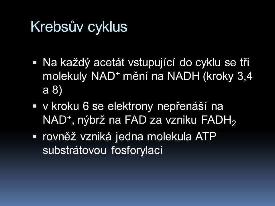 Krebsův cyklus Na každý acetát vstupující do cyklu se tři molekuly NAD+ mění na NADH (kroky 3,4 a 8)