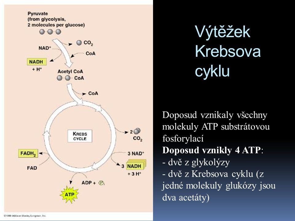 Výtěžek Krebsova cyklu