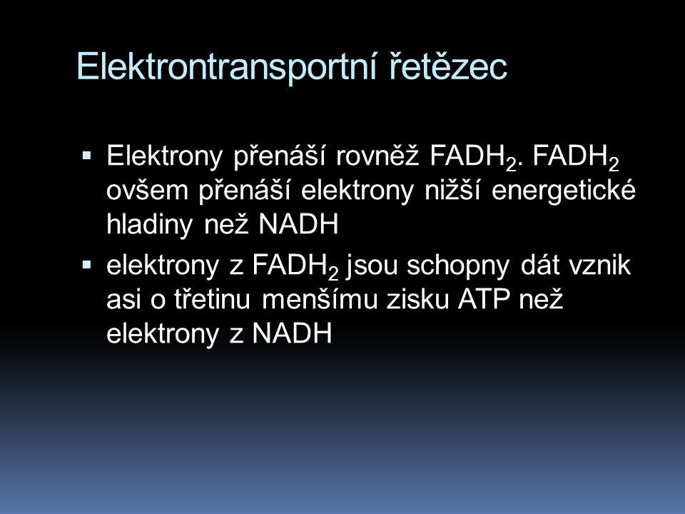Elektrontransportní řetězec