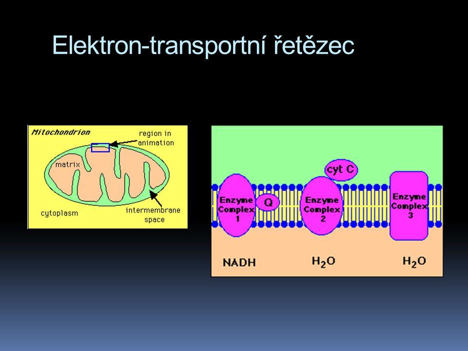 Elektron-transportní řetězec
