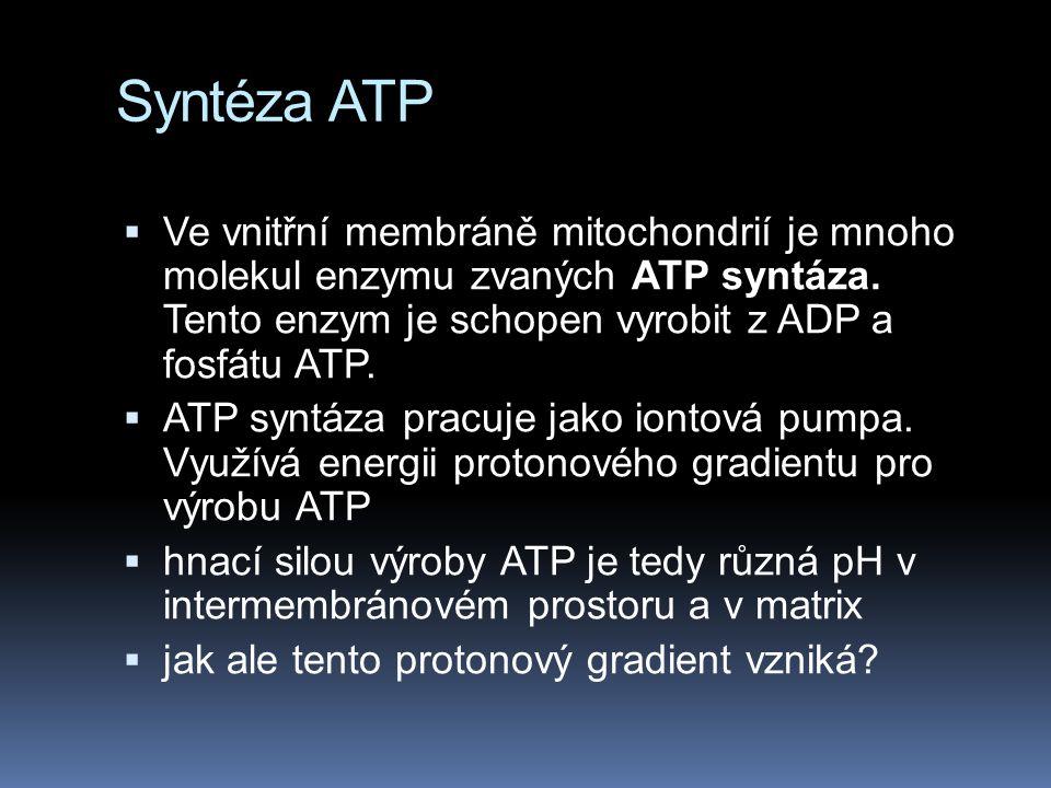 Syntéza ATP Ve vnitřní membráně mitochondrií je mnoho molekul enzymu zvaných ATP syntáza. Tento enzym je schopen vyrobit z ADP a fosfátu ATP.