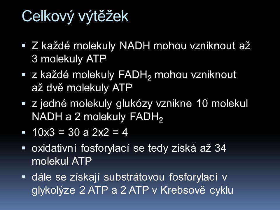 Celkový výtěžek Z každé molekuly NADH mohou vzniknout až 3 molekuly ATP. z každé molekuly FADH2 mohou vzniknout až dvě molekuly ATP.