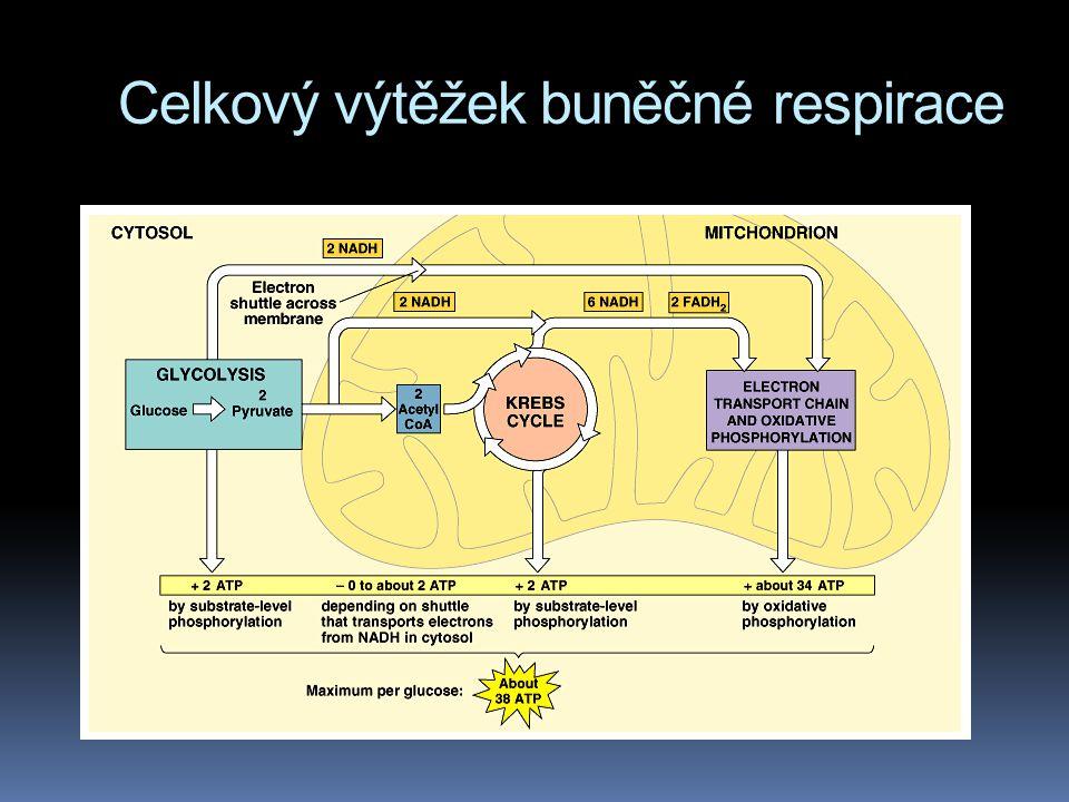 Celkový výtěžek buněčné respirace