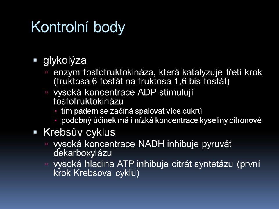 Kontrolní body glykolýza Krebsův cyklus