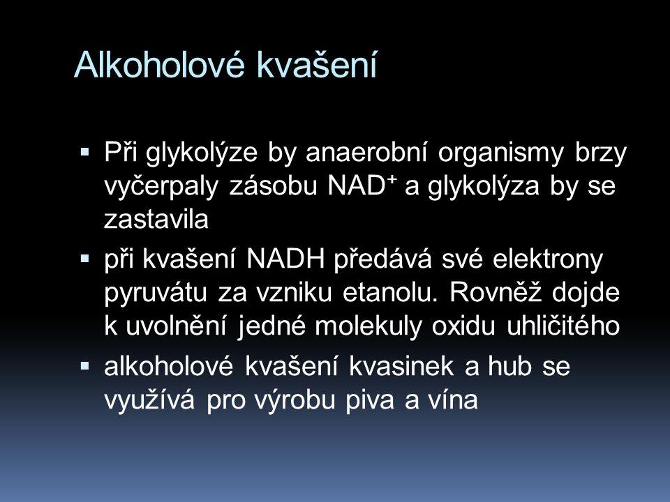 Alkoholové kvašení Při glykolýze by anaerobní organismy brzy vyčerpaly zásobu NAD+ a glykolýza by se zastavila.
