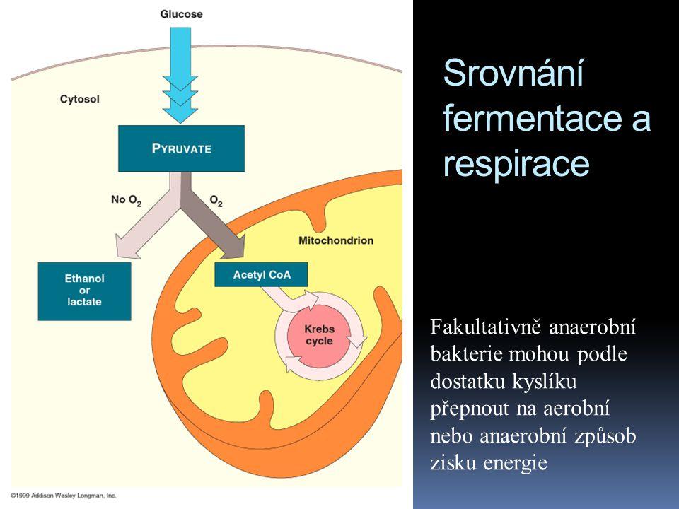 Srovnání fermentace a respirace