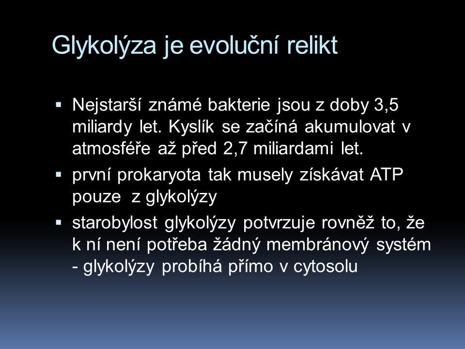 Glykolýza je evoluční relikt