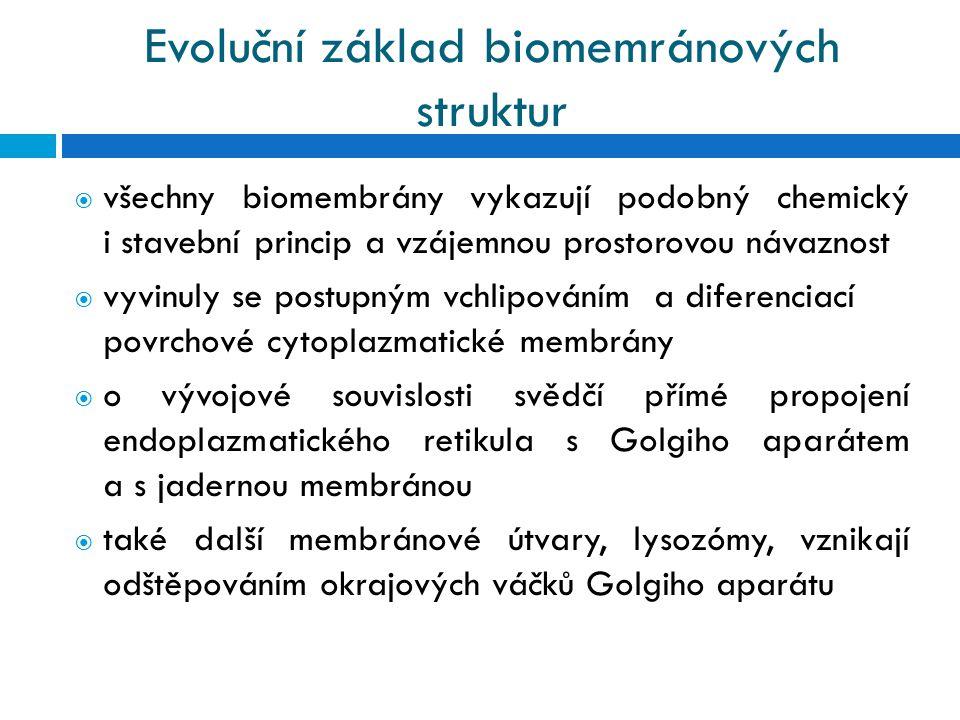 Evoluční základ biomemránových struktur