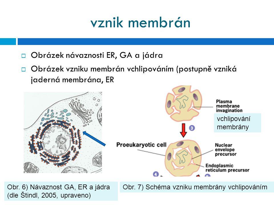 vznik membrán Obrázek návaznosti ER, GA a jádra