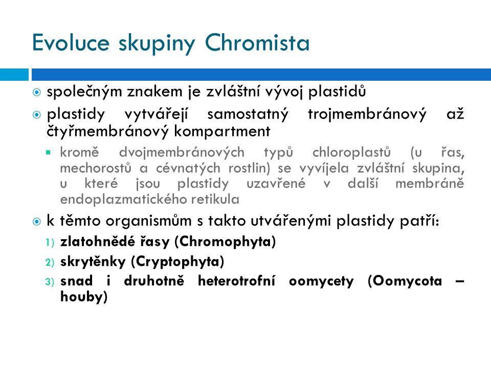 Evoluce skupiny Chromista