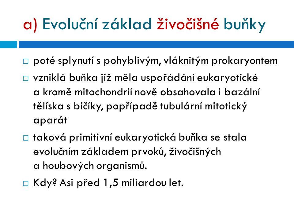 a) Evoluční základ živočišné buňky
