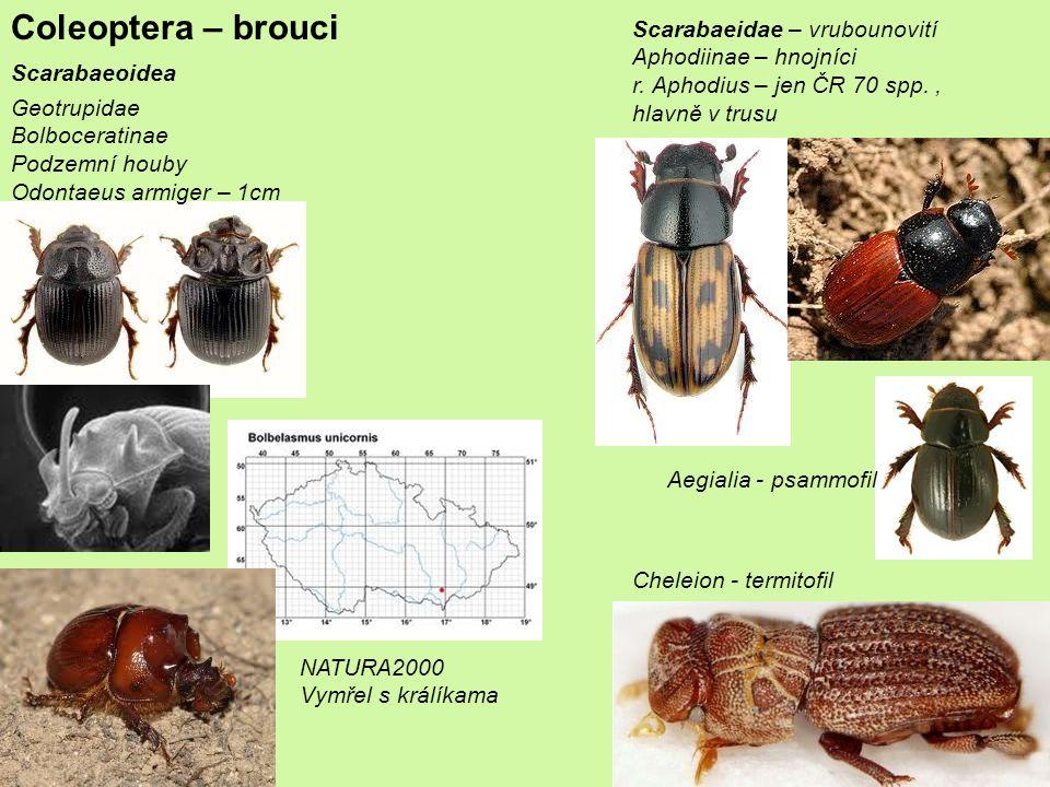 Coleoptera – brouci Scarabaeidae – vrubounovití Aphodiinae – hnojníci