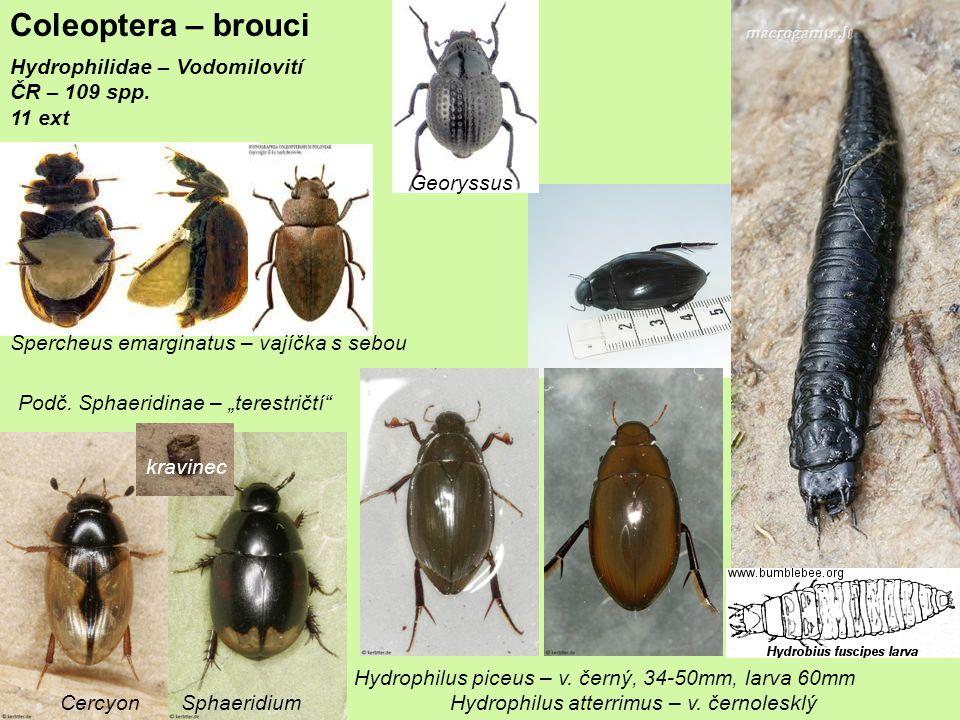 Coleoptera – brouci Hydrophilidae – Vodomilovití ČR – 109 spp. 11 ext