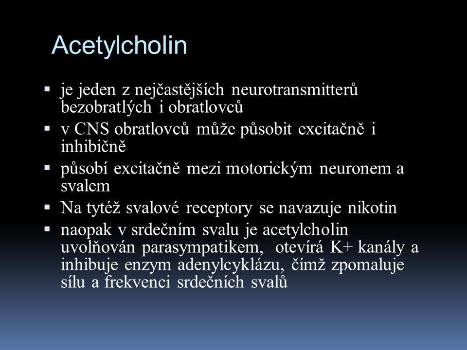 Acetylcholin je jeden z nejčastějších neurotransmitterů bezobratlých i obratlovců. v CNS obratlovců může působit excitačně i inhibičně.