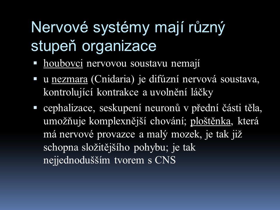 Nervové systémy mají různý stupeň organizace