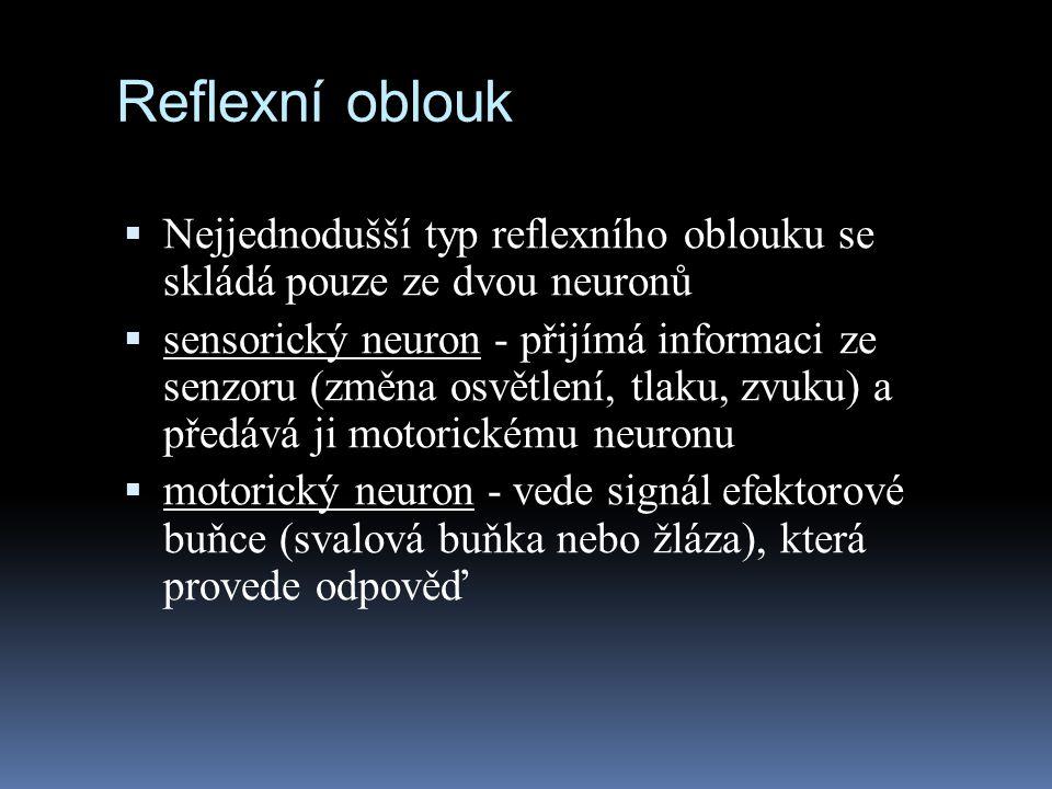 Reflexní oblouk Nejjednodušší typ reflexního oblouku se skládá pouze ze dvou neuronů.