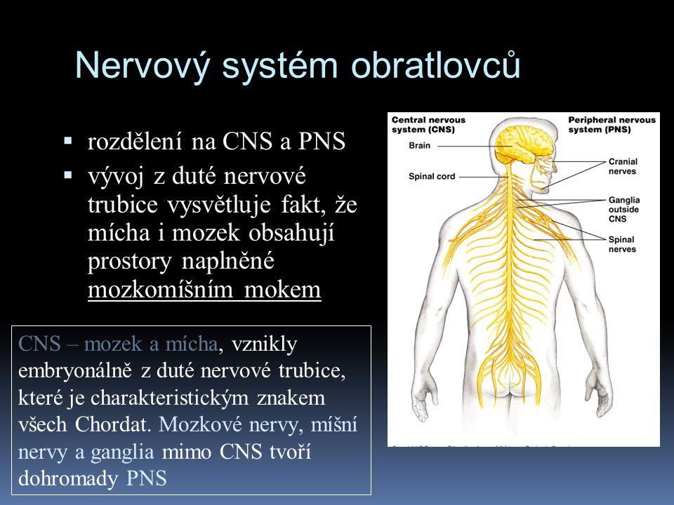 Nervový systém obratlovců