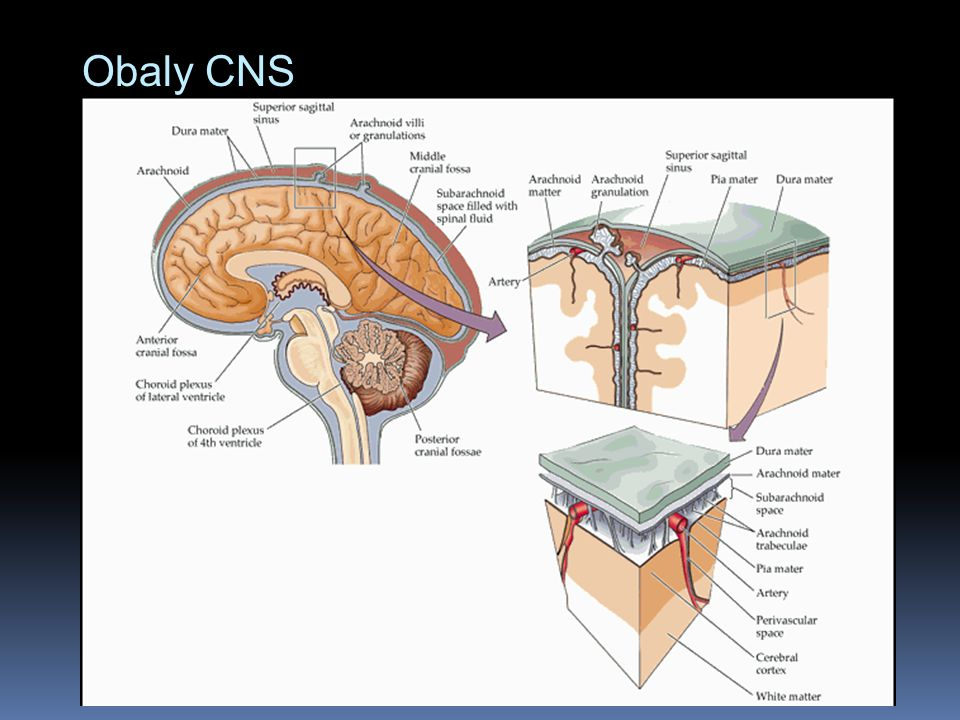 Obaly CNS