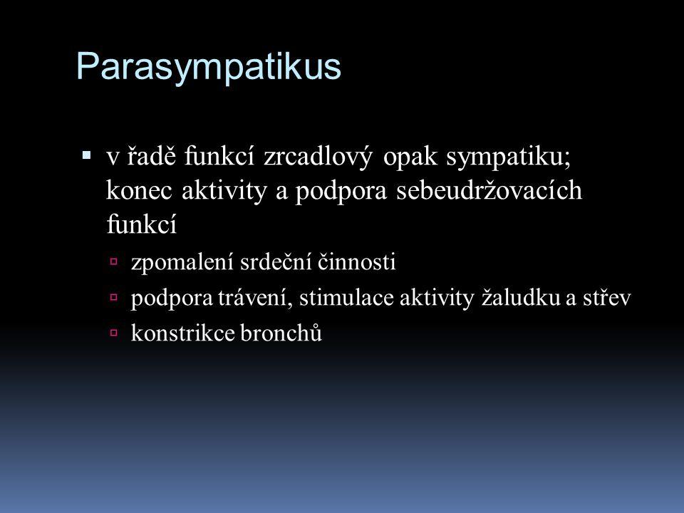 Parasympatikus v řadě funkcí zrcadlový opak sympatiku; konec aktivity a podpora sebeudržovacích funkcí.