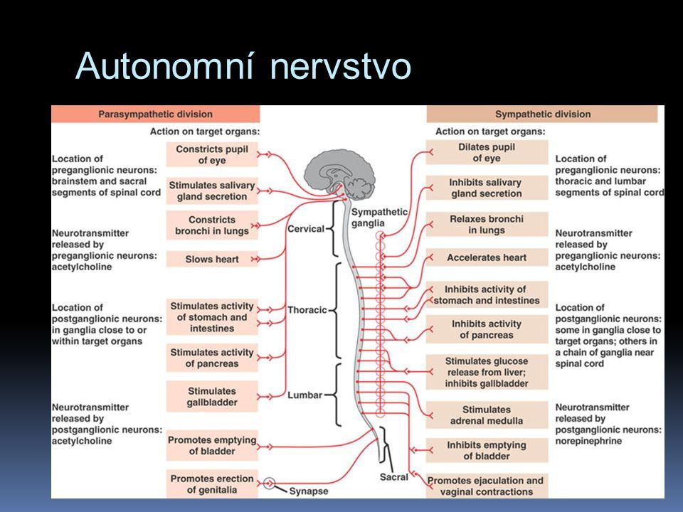 Autonomní nervstvo