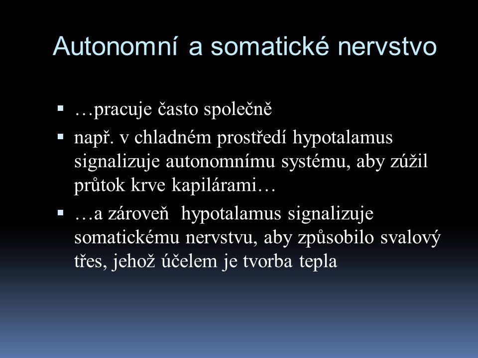 Autonomní a somatické nervstvo
