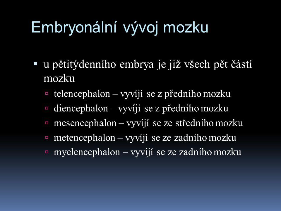 Embryonální vývoj mozku