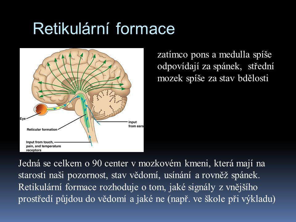 Retikulární formace zatímco pons a medulla spíše odpovídají za spánek, střední mozek spíše za stav bdělosti.