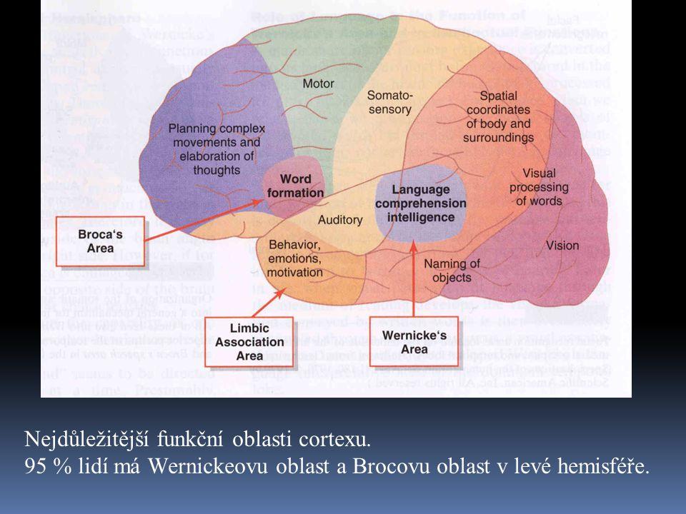 Nejdůležitější funkční oblasti cortexu.