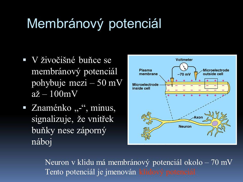 Membránový potenciál V živočišné buňce se membránový potenciál pohybuje mezi – 50 mV až – 100mV.