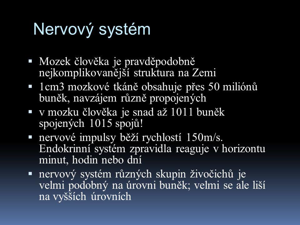 Nervový systém Mozek člověka je pravděpodobně nejkomplikovanější struktura na Zemi.