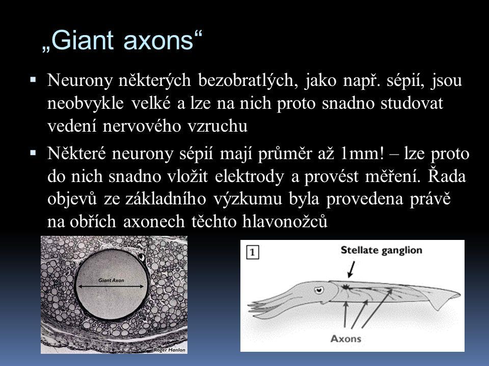 """""""Giant axons Neurony některých bezobratlých, jako např. sépií, jsou neobvykle velké a lze na nich proto snadno studovat vedení nervového vzruchu."""