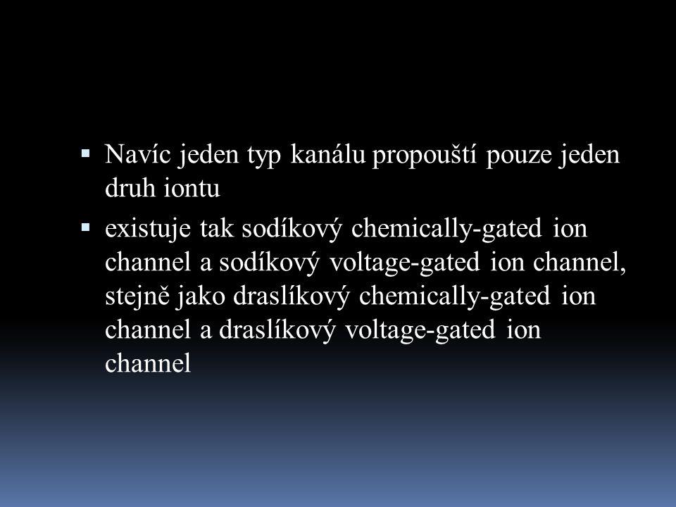 Navíc jeden typ kanálu propouští pouze jeden druh iontu