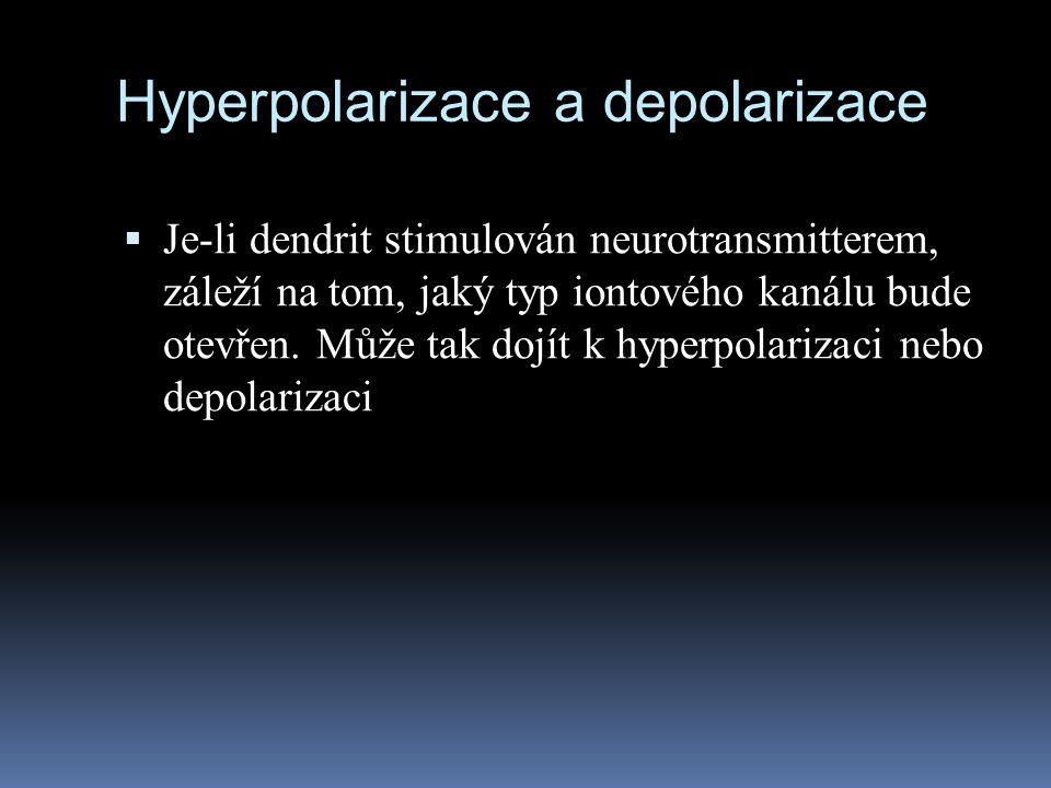 Hyperpolarizace a depolarizace