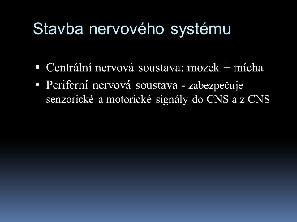 Stavba nervového systému