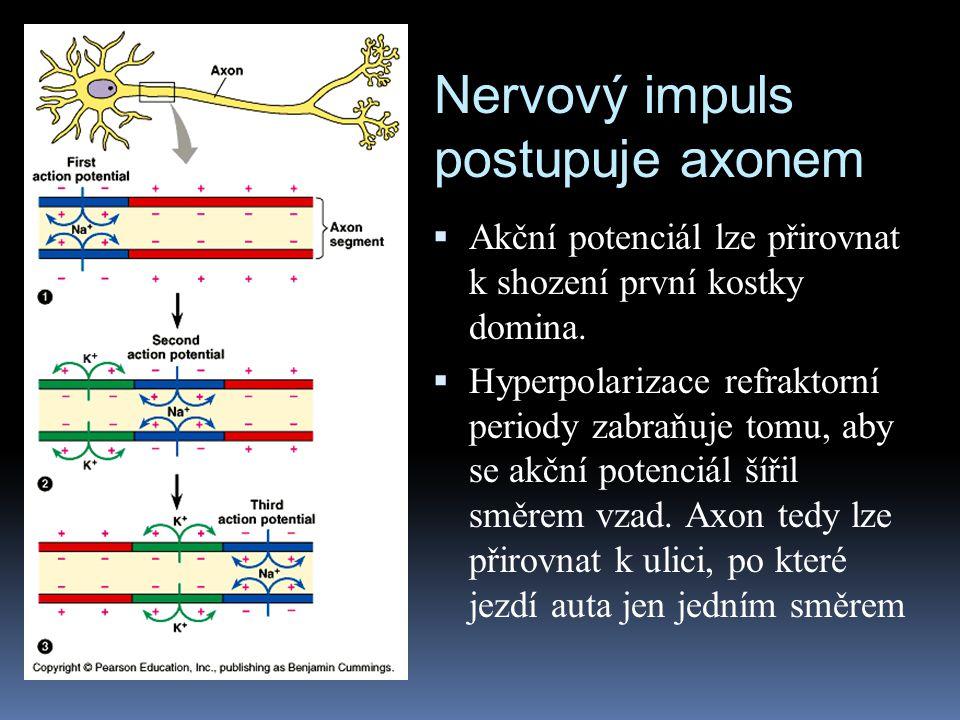 Nervový impuls postupuje axonem