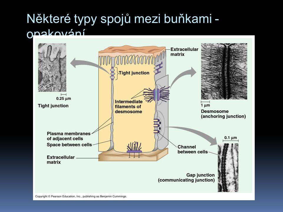 Některé typy spojů mezi buňkami - opakování