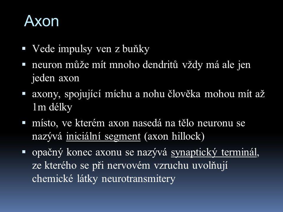 Axon Vede impulsy ven z buňky
