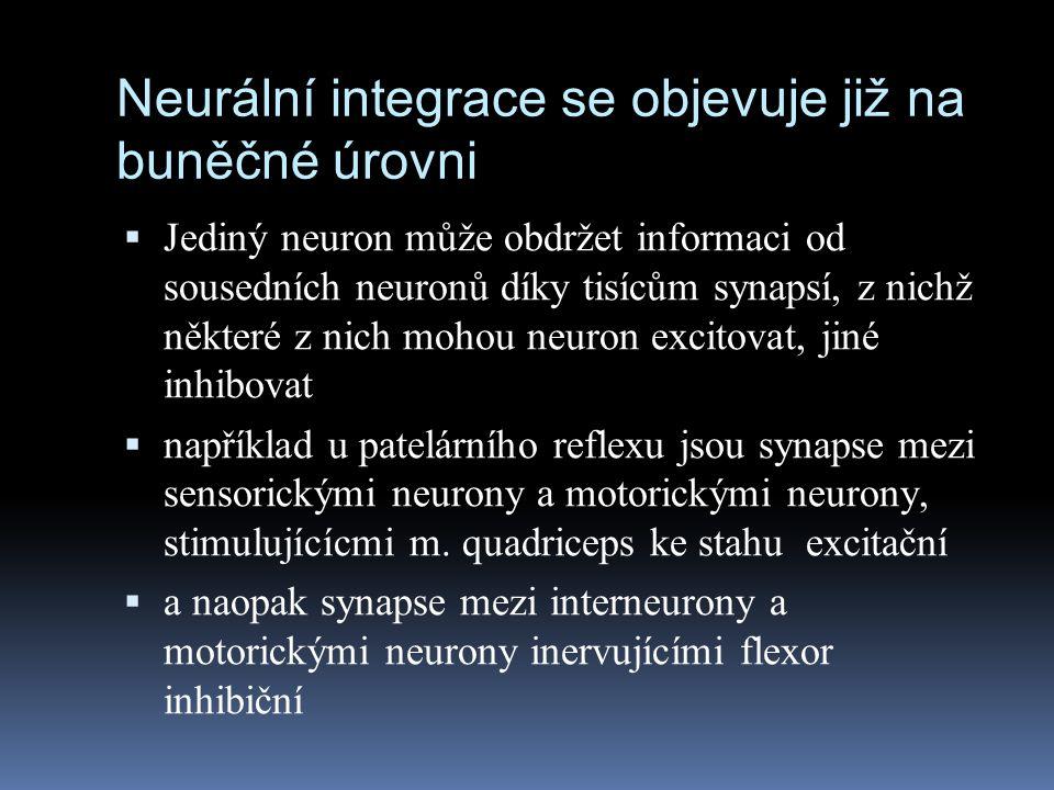Neurální integrace se objevuje již na buněčné úrovni