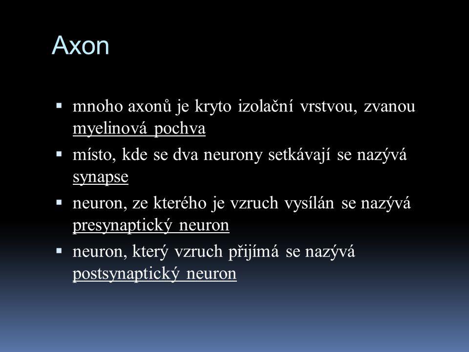 Axon mnoho axonů je kryto izolační vrstvou, zvanou myelinová pochva