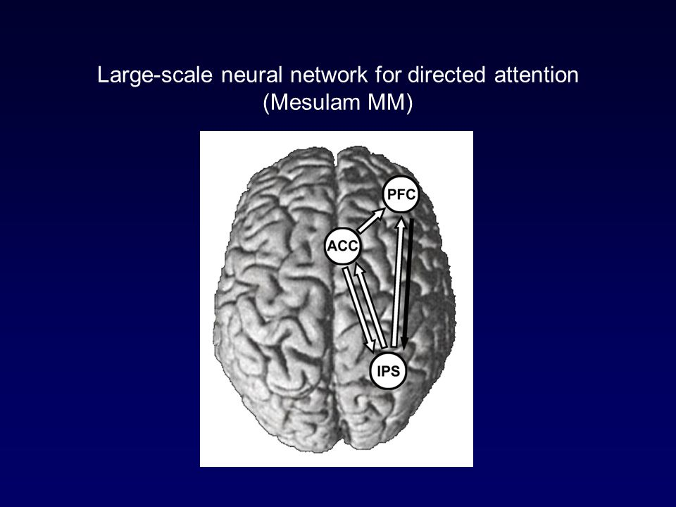 Large-scale neural network for directed attention (Mesulam MM)