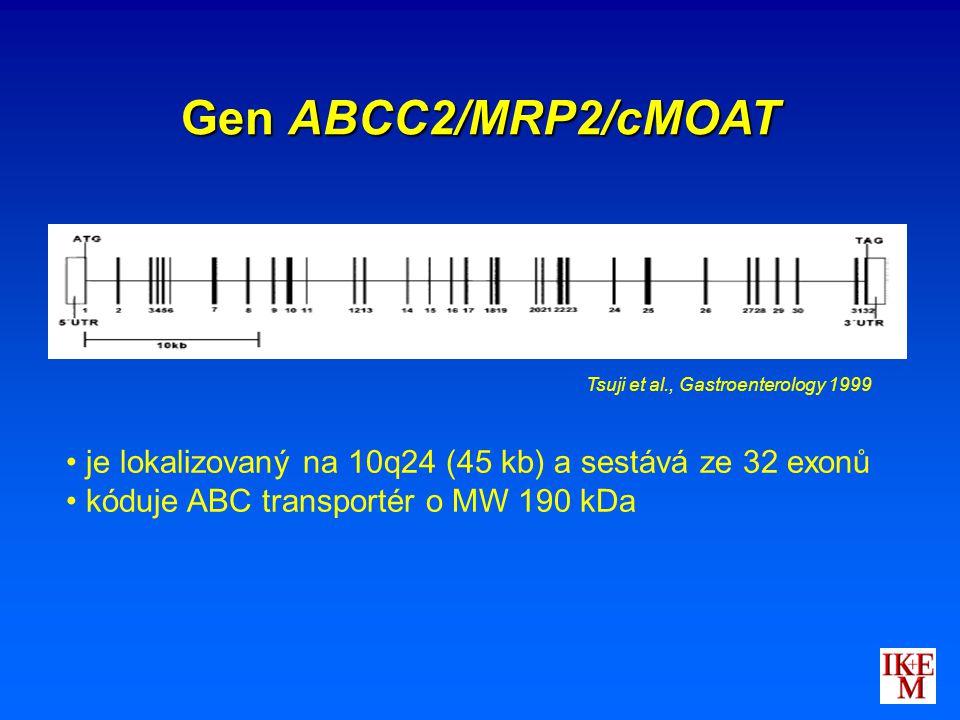 Gen ABCC2/MRP2/cMOAT Tsuji et al., Gastroenterology 1999. je lokalizovaný na 10q24 (45 kb) a sestává ze 32 exonů.