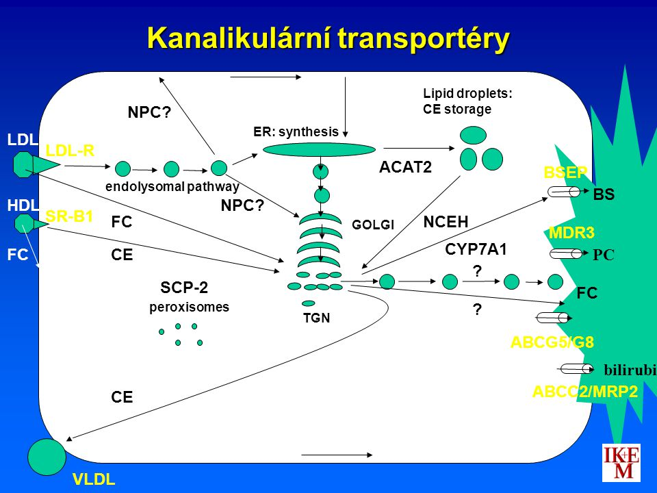 Kanalikulární transportéry