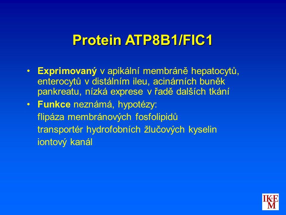 Protein ATP8B1/FIC1