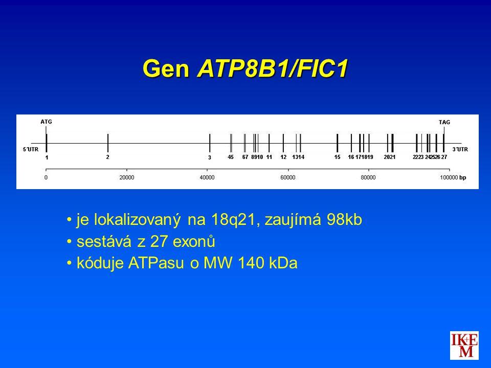 Gen ATP8B1/FIC1 je lokalizovaný na 18q21, zaujímá 98kb