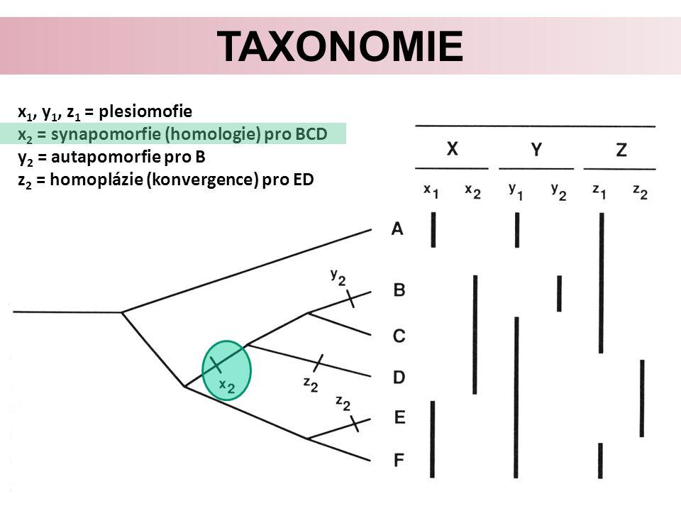 Taxonomie x1, y1, z1 = plesiomofie