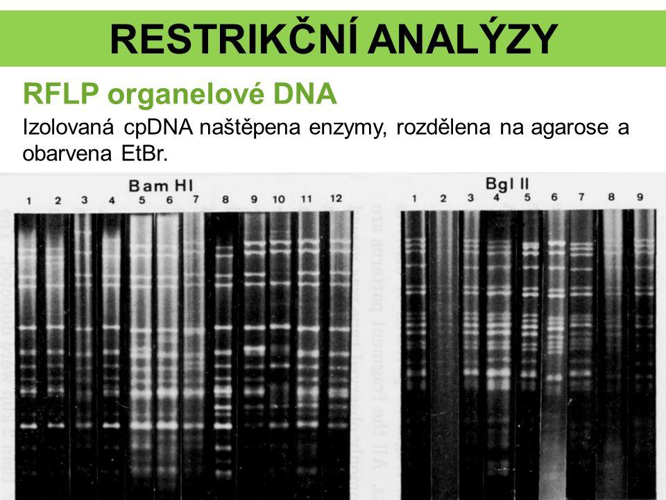 RESTRIKČNÍ ANALÝZY RFLP organelové DNA